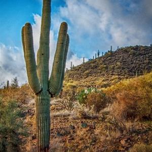 Saguaro Wickenberg