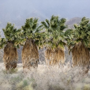 Palms in row