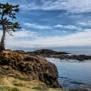 Rocky shore with tree