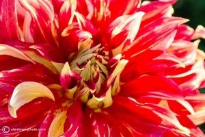 Dahlia Nick Senior taken by Spokane Photographer Alan Tower www.alantowerphoto.com