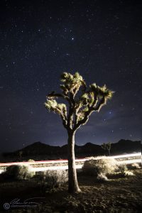 Be prepared for the unexpected. A car drove by in this exposure, adding the light beams and the directional light on the Joshua Tree.