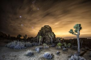 This scene in Joshua Tree picks up some light from the distance, and is warmer as a result.